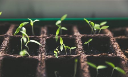green-investing-4